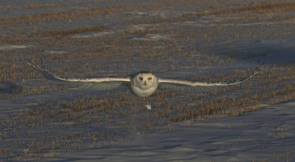 winter_birds_3
